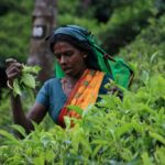 Zuzana-Pfefferová_Zberačka-čajových-lístkov-Srí-Lanka