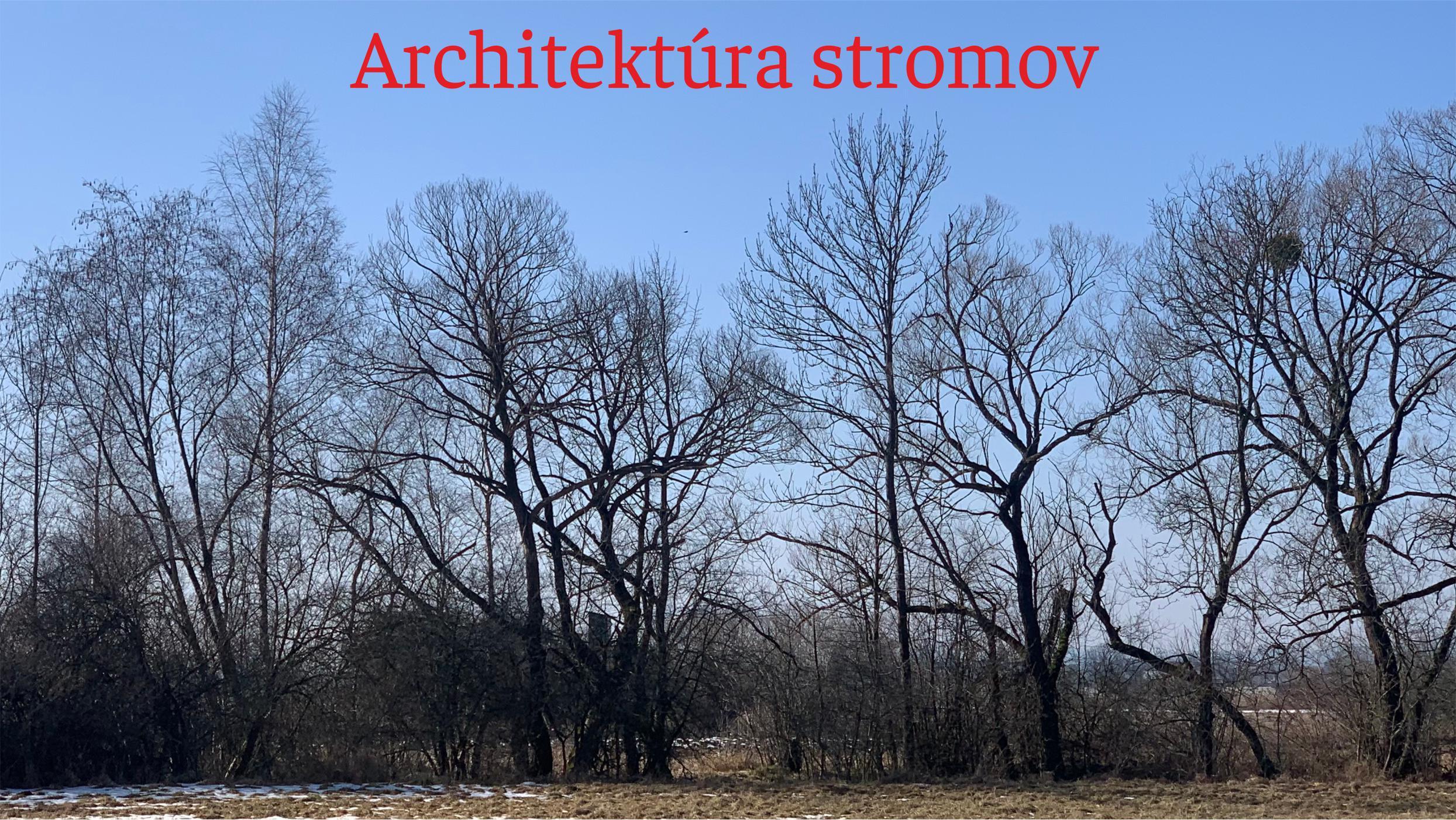"""Náš Turiec – Kde všade nachádzame """"tykadlá prírody"""" – Architektúra stromov"""